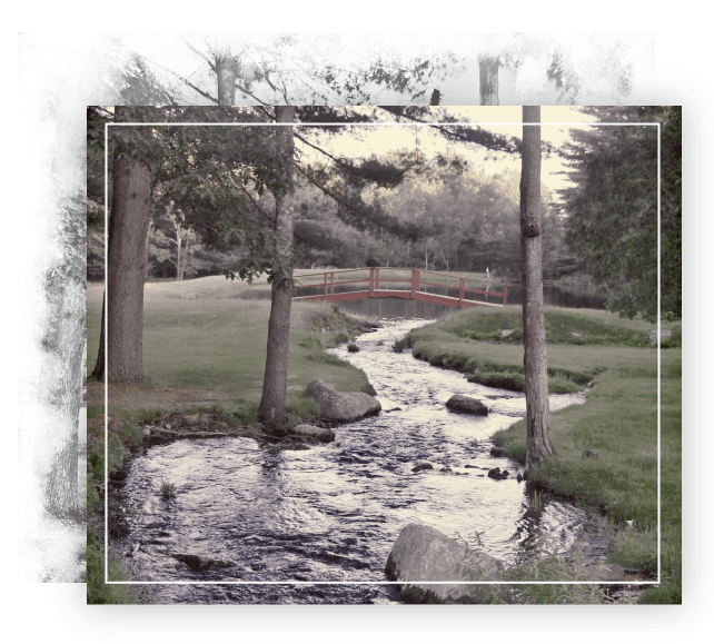 stream flowing between trees and small bridge